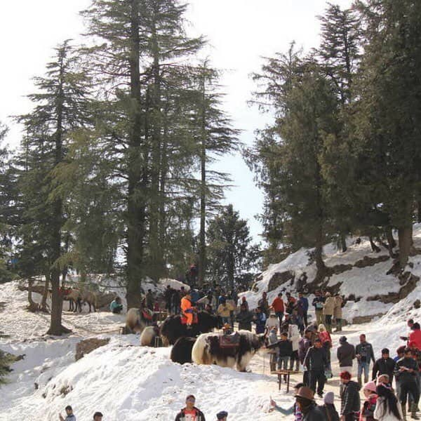 Indira Tourist Park Shimla Tour Package